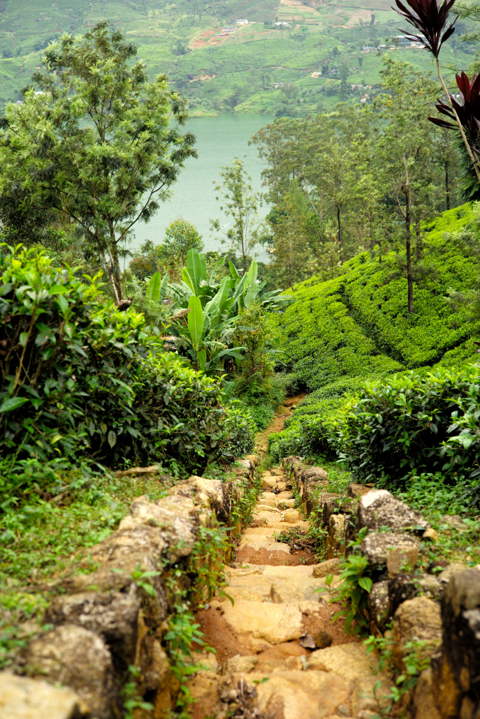 FMN | Tea Trails  - 006