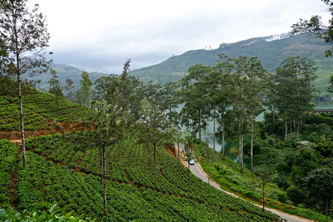 FMN | Tea Trails  - 019