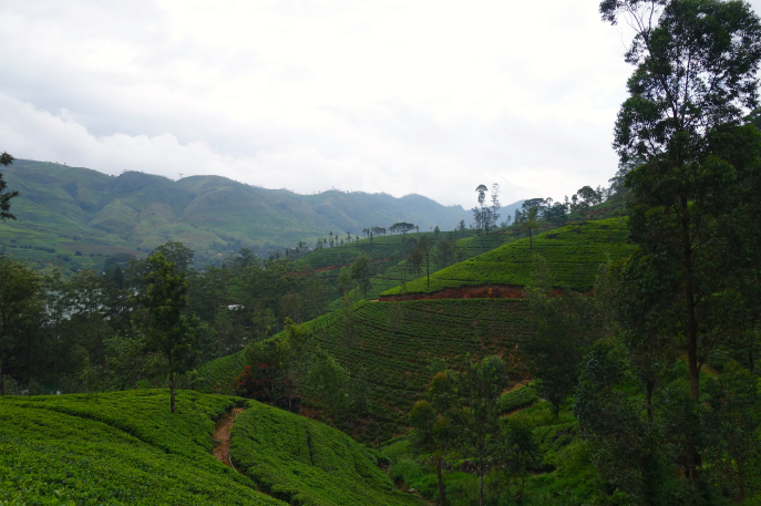 FMN | Tea Trails  - 027