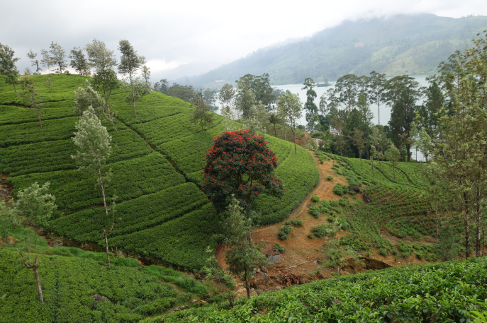 FMN | Tea Trails  - 048
