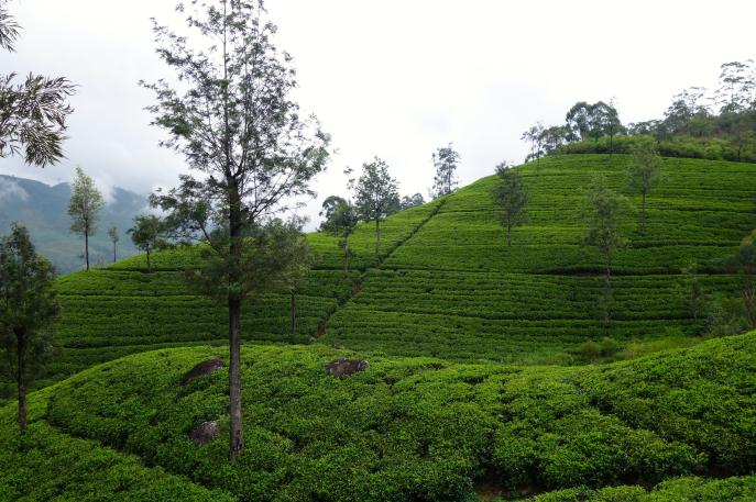 FMN | Tea Trails  - 050