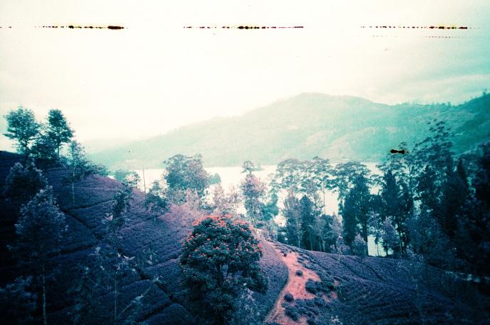 FMN | Tea Trails  - 103