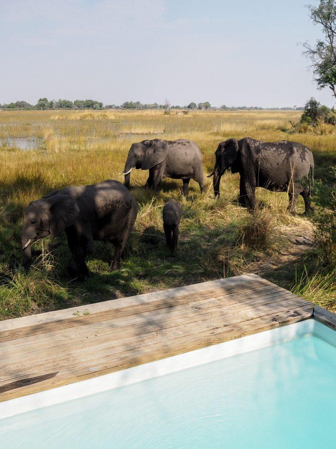 fmn-lucy-williams-wilderness-safaris-botswana-vumbura-plains-34