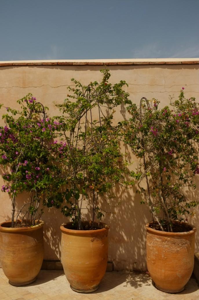 marrakech-1-el-fenn - 052