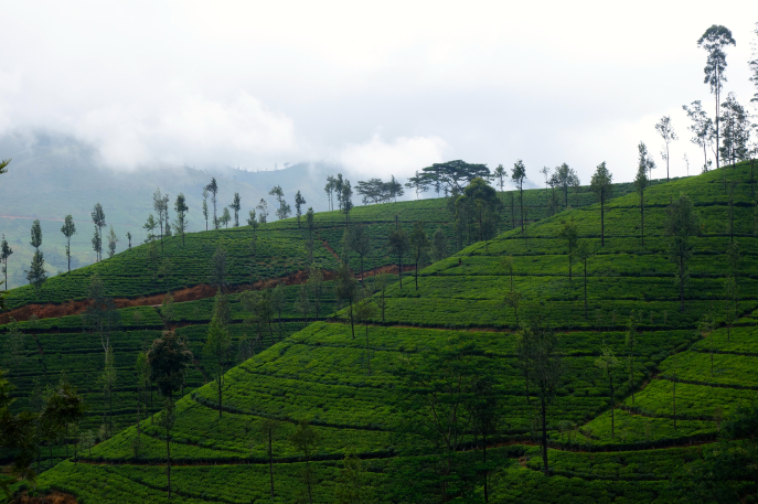 FMN | Tea Trails  - 046