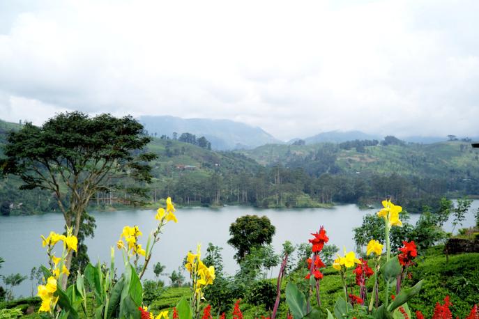 FMN | Tea Trails  - 058