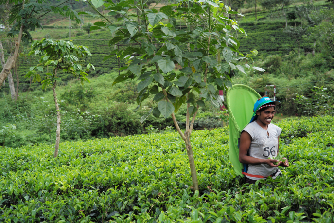 FMN | Tea Trails  - 059