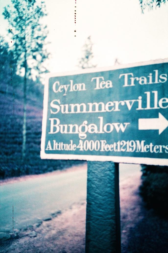 FMN | Tea Trails  - 104