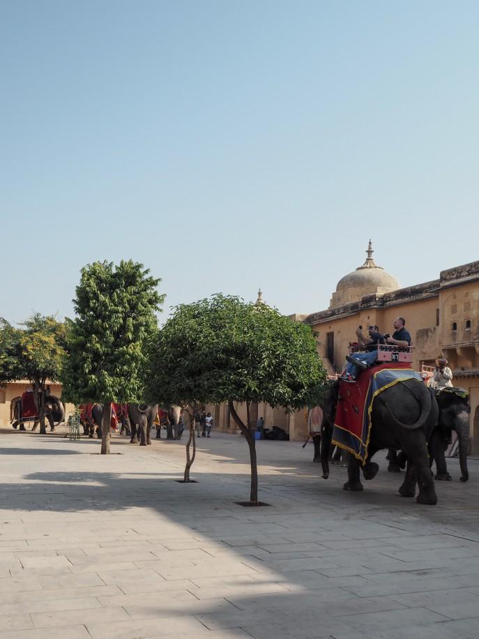 FMN-Rajasthan-Roadtrip-Jaipur-8