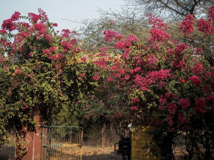 Fashion-Me-Now-Rajasthan-Ranthambore-Tiger-Safari-65