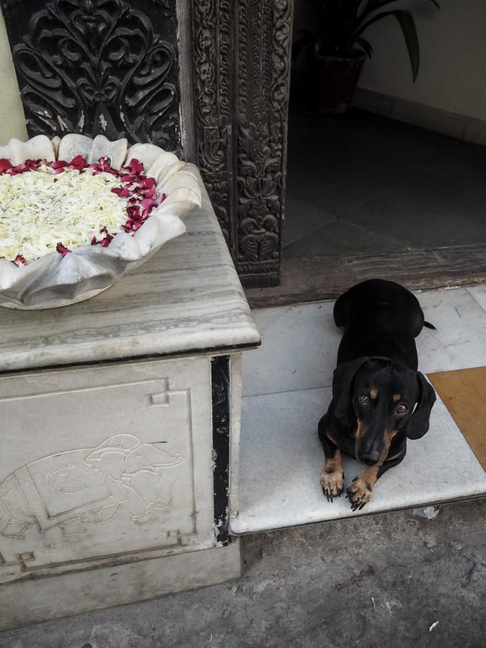 FMN-Rajasthan-Road-Trip-Udaipur-Travel-Diary-72