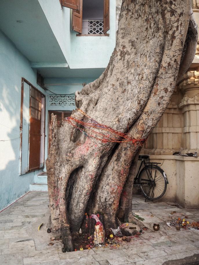 FMN-Rajasthan-Road-Trip-Udaipur-Travel-Diary-85