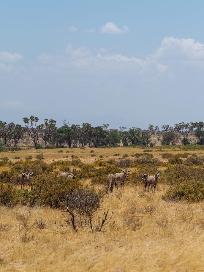 fashion-me-now-kenya-safari-travel-diary-10