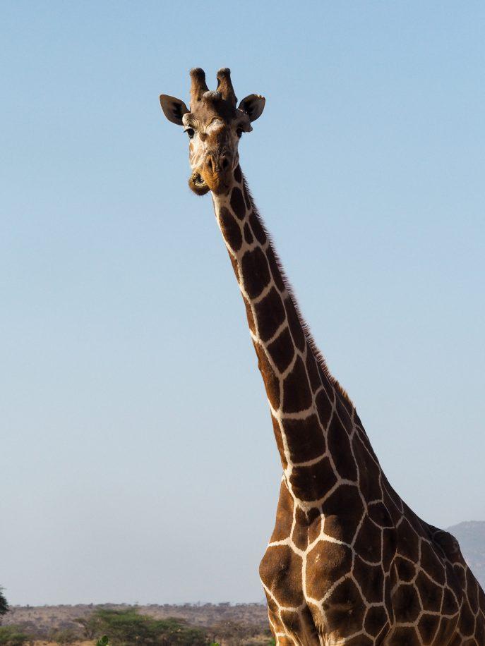 fashion-me-now-kenya-safari-travel-diary-40