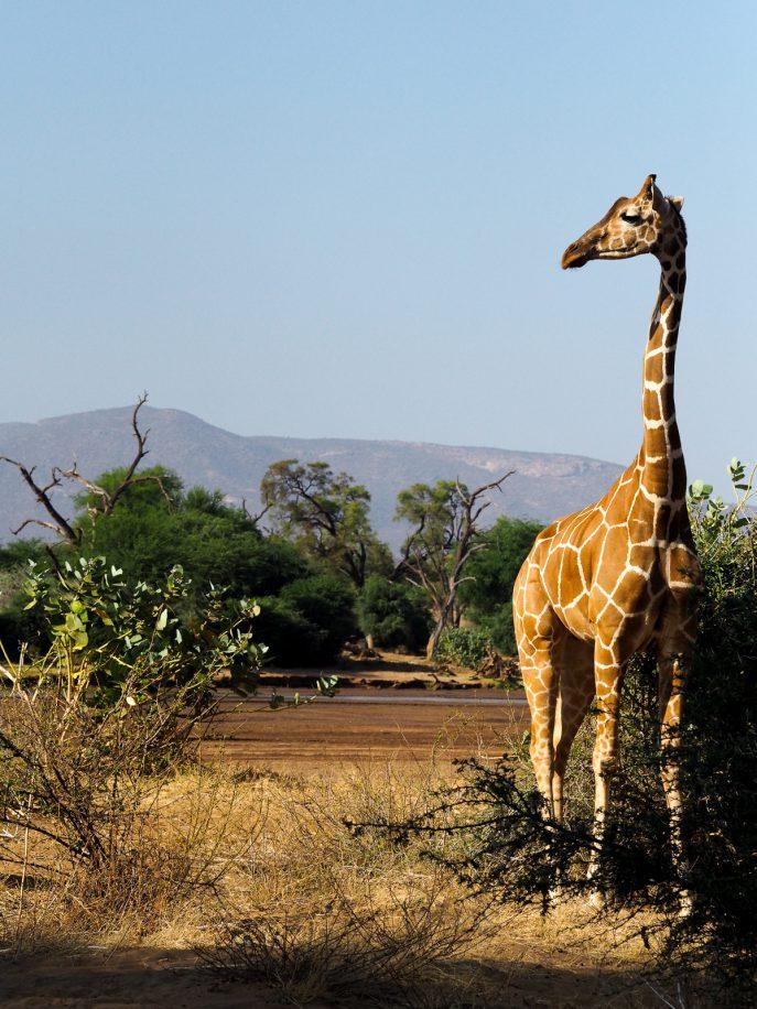 fashion-me-now-kenya-safari-travel-diary-42