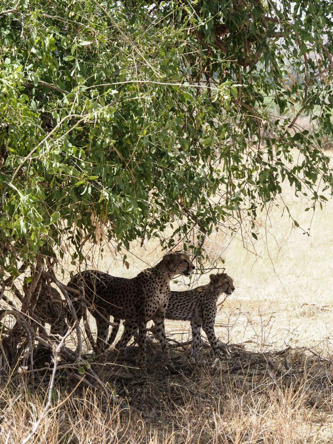 fashion-me-now-kenya-safari-travel-diary-52