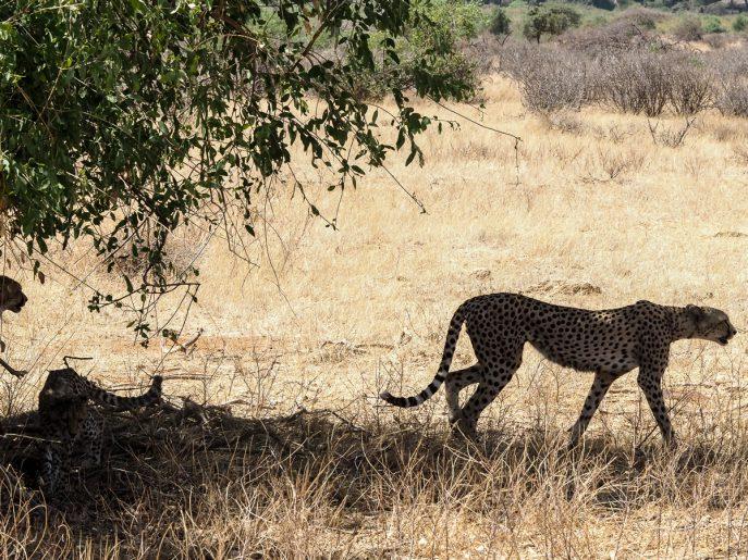 fashion-me-now-kenya-safari-travel-diary-53