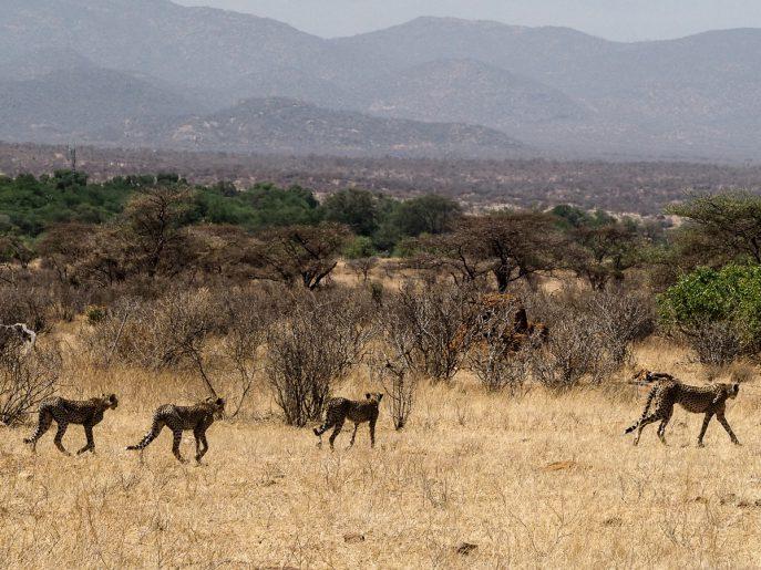 fashion-me-now-kenya-safari-travel-diary-54