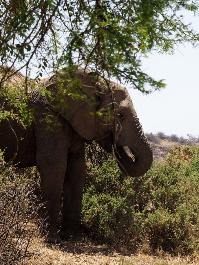 fashion-me-now-kenya-safari-travel-diary-60