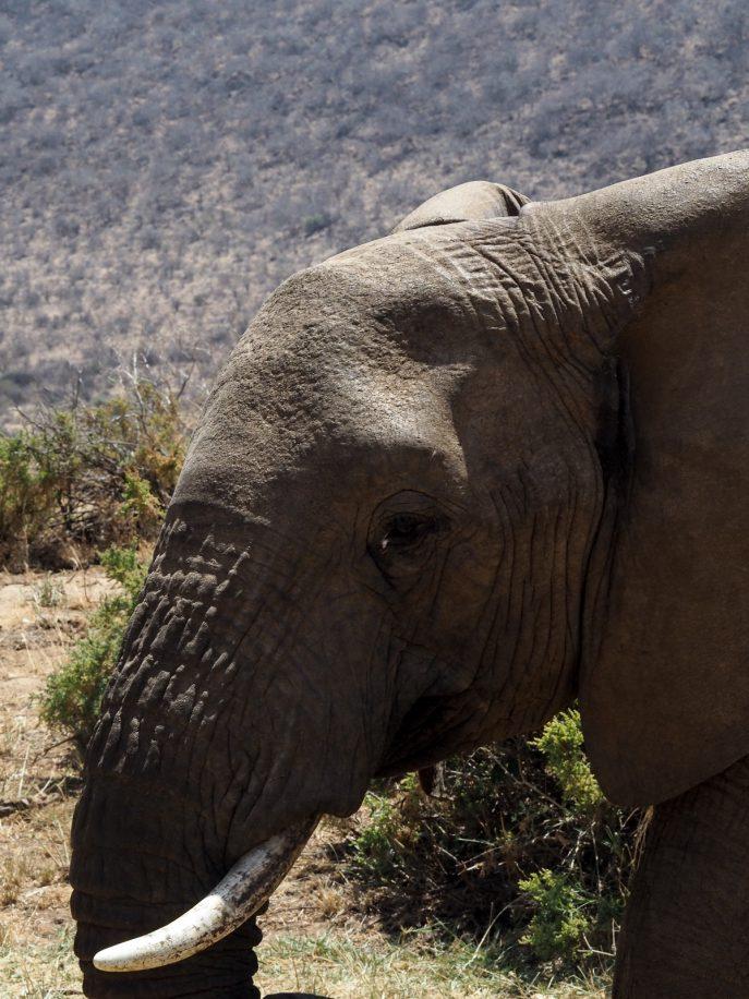 fashion-me-now-kenya-safari-travel-diary-61