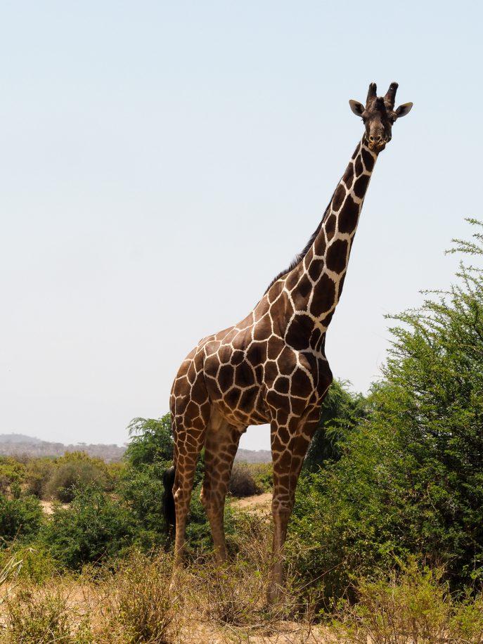 fashion-me-now-kenya-safari-travel-diary-67