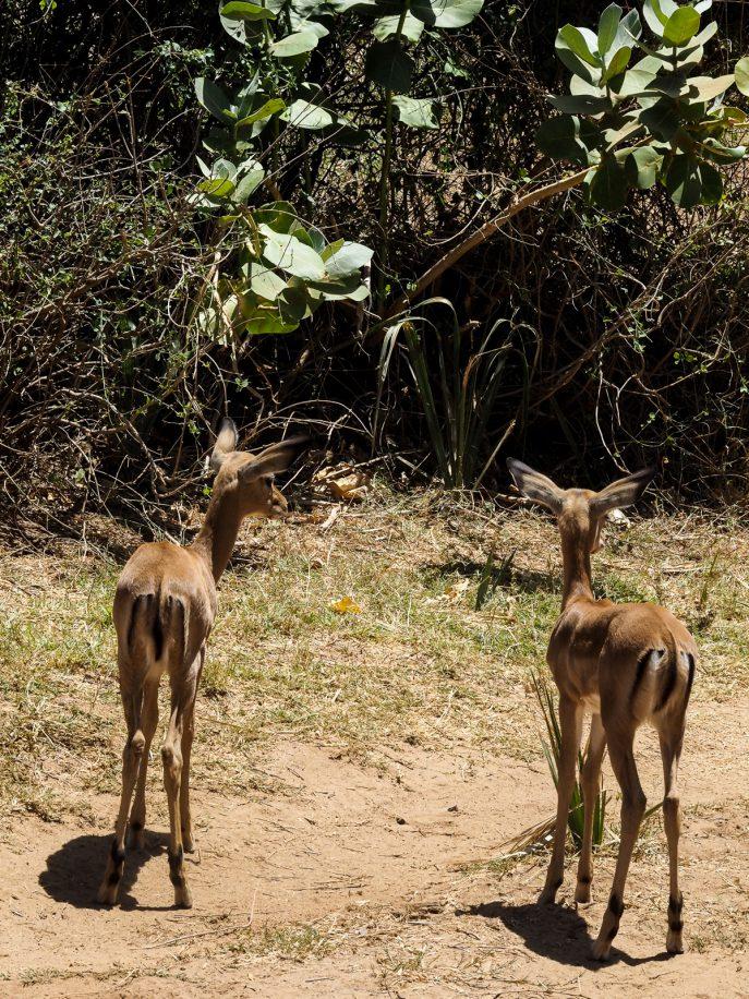 fashion-me-now-kenya-safari-travel-diary-68