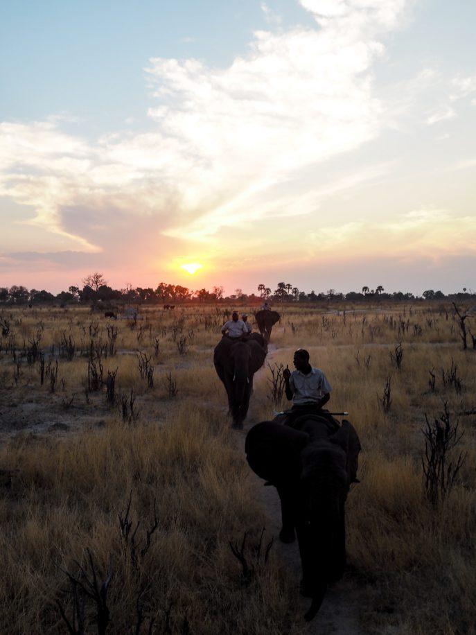 lucy-williams-fmn_botswana-safari-abu-camp-20