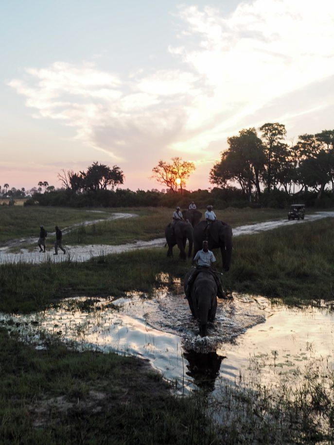 lucy-williams-fmn_botswana-safari-abu-camp-21