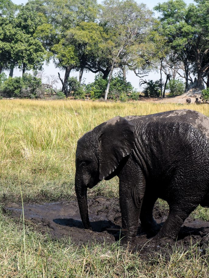 lucy-williams-fmn_botswana-safari-abu-camp-75
