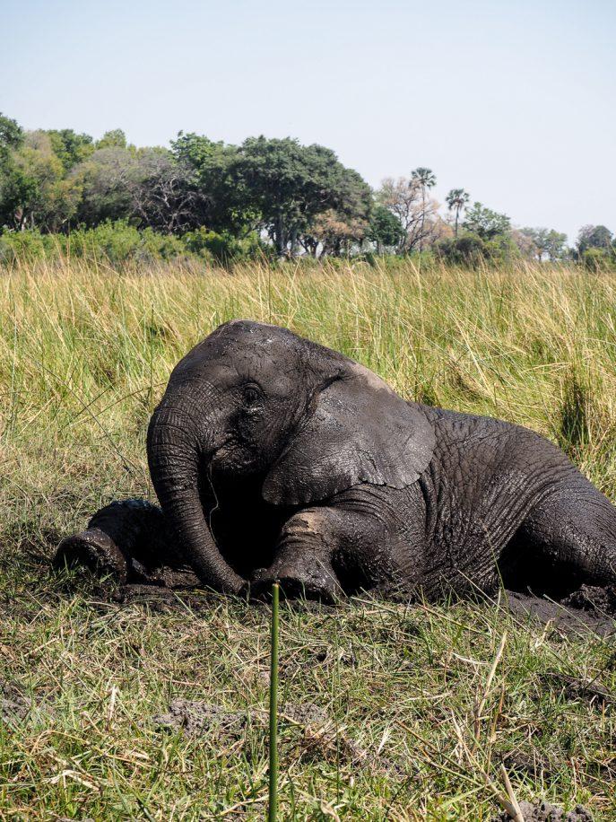 lucy-williams-fmn_botswana-safari-abu-camp-79