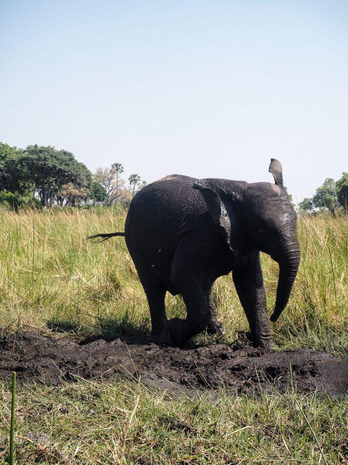 lucy-williams-fmn_botswana-safari-abu-camp-80